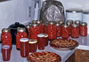 Harvesttime: my mom's canned cherries, jams, pies